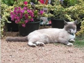 Simon, the King Feed garden cat, made a cameo appearance.